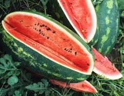 jubilee melons